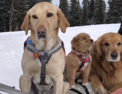 Puppies & Pow Video by Drew Warkentin